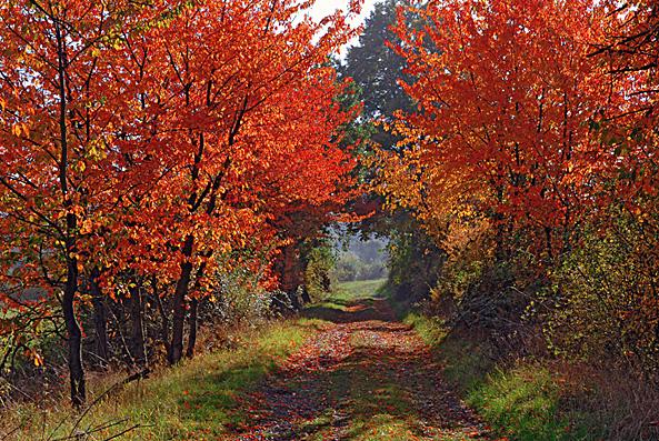 http://pierrepaul.joueb.com/images/automne09.jpg